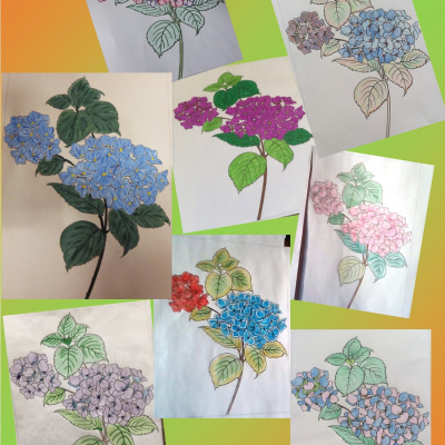 hydrangeas collage